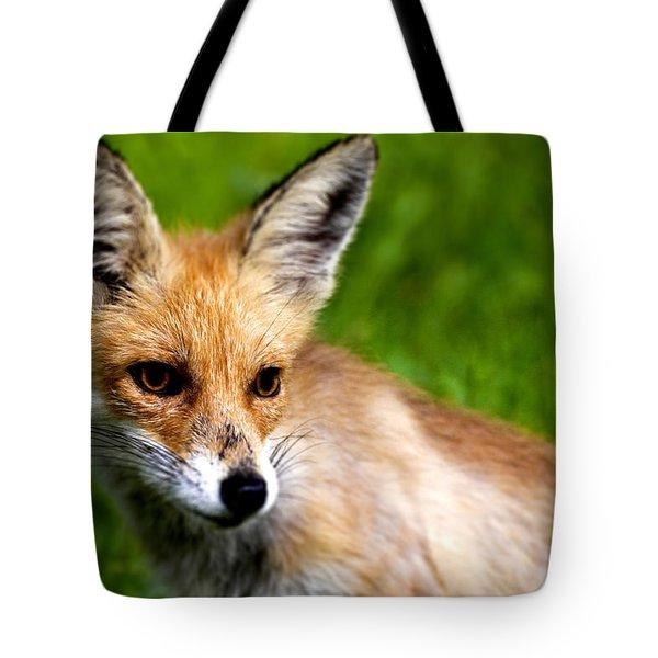 Fox Pup Tote Bag by Fabrizio Troiani