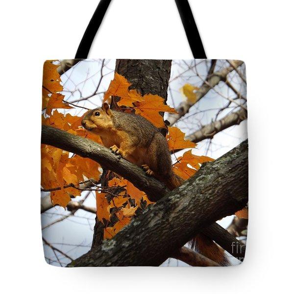Fox Squirrel In Autumn Tote Bag by Sara  Raber