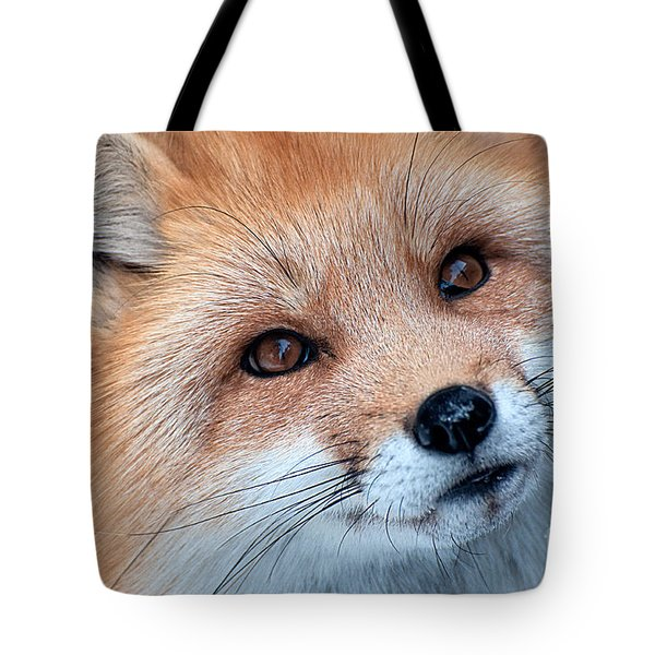 Tote Bag featuring the photograph Foxy Lady by Bianca Nadeau