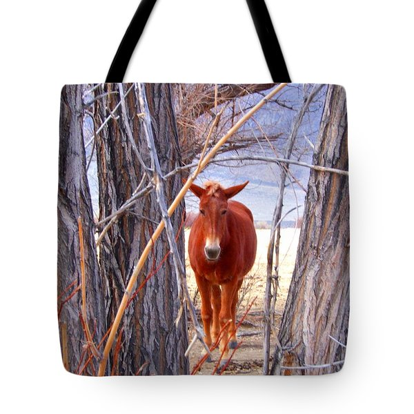 Tote Bag featuring the photograph Framed by Marilyn Diaz