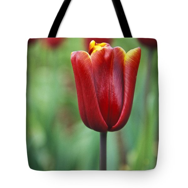 Freshness  Tote Bag by Lana Enderle