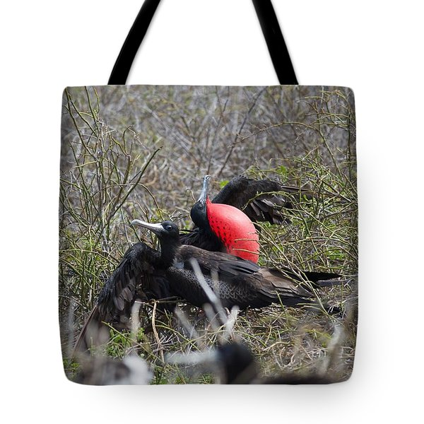 Frigate Mating Dance Tote Bag