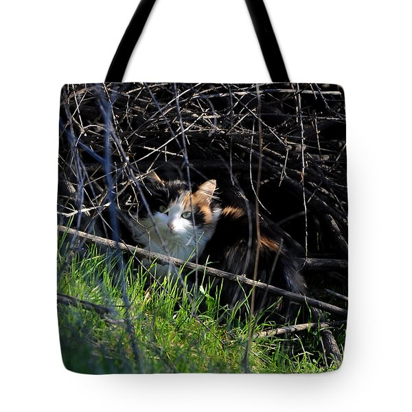 Frightened Feral Calico  Tote Bag