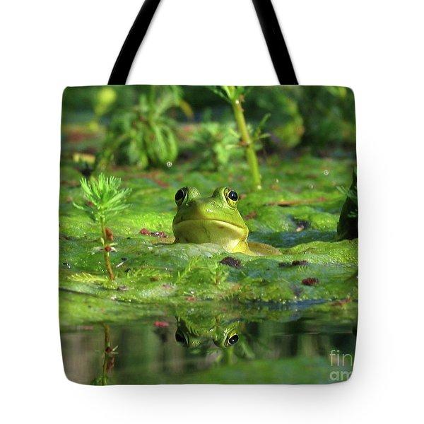 Frog Tote Bag by Douglas Stucky