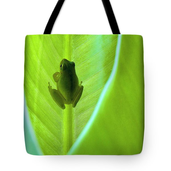 Tote Bag featuring the photograph Frog In Blankie by Faith Williams