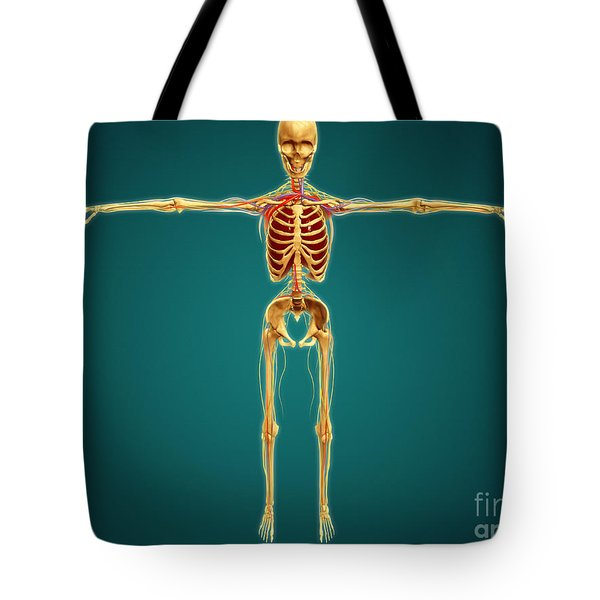 Front View Of Human Skeleton Tote Bag by Stocktrek Images