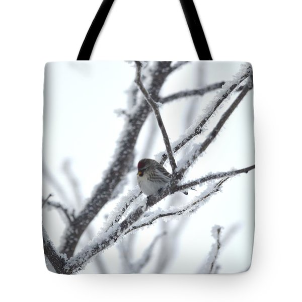 Tote Bag featuring the photograph Frosted Branches by Dacia Doroff