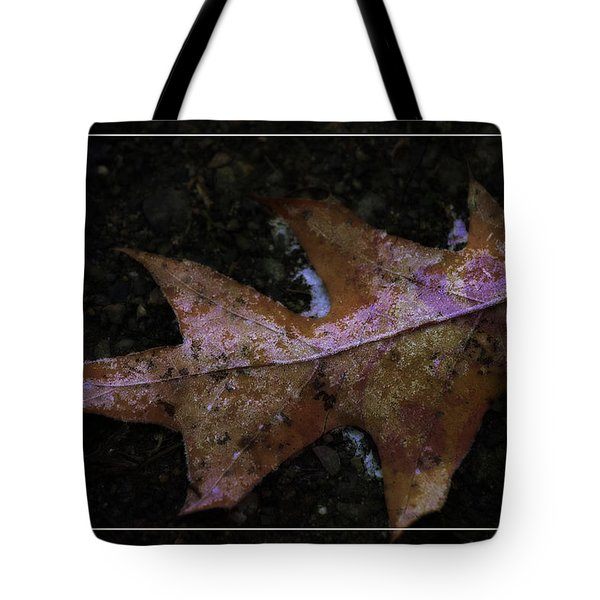 Tote Bag featuring the photograph Frosted Oak by Tikvah's Hope