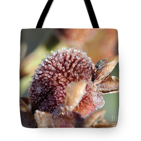 Frozen Dew Drops Melt From Canna Lily Seed Pods Tote Bag by J McCombie