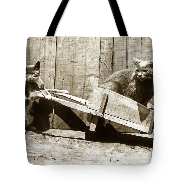 Tote Bag featuring the photograph Fun With Cats Henry King Nourse Photographer Circa 1900 by California Views Mr Pat Hathaway Archives