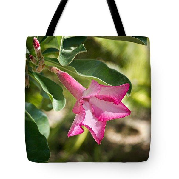 Fushia Oleander Near Phoenx Arizona 1 Tote Bag by Douglas Barnett