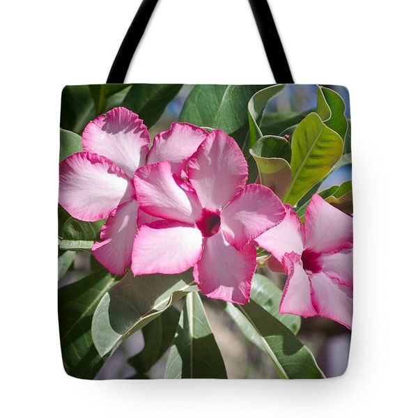 Fushia Oleander Near Phoenx Arizona 2 Tote Bag by Douglas Barnett