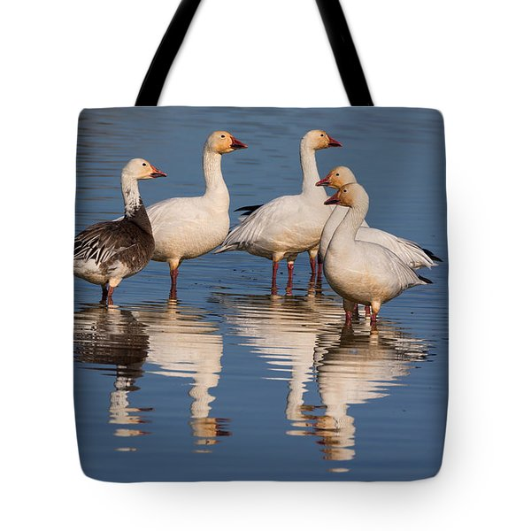 Gaggle Of Snow Geese Reflected Tote Bag