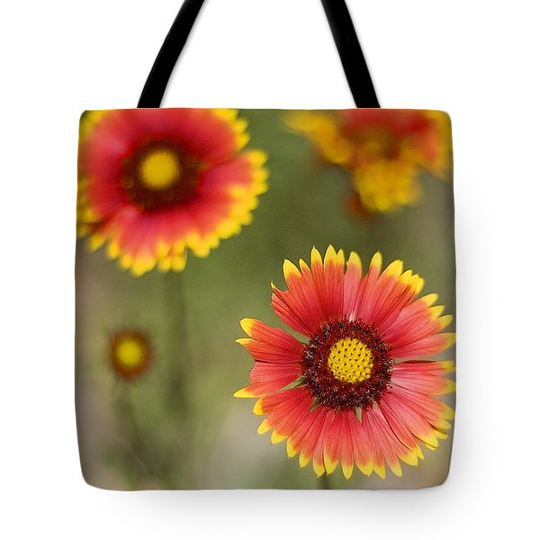 Tote Bag featuring the photograph Gaillardia 'arizona Sun' by Richard J Thompson