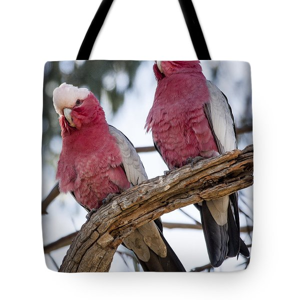Galahs Tote Bag by Steven Ralser
