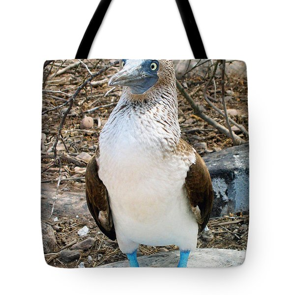 Galapagos Island Blue Footed Booby Bird 1 Tote Bag by Eva Kaufman