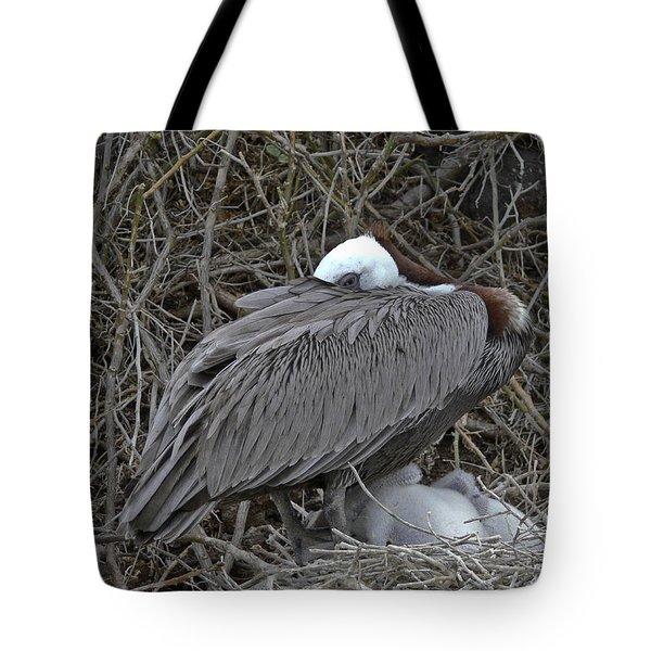 Galapagos - Watchful Pelican Tote Bag