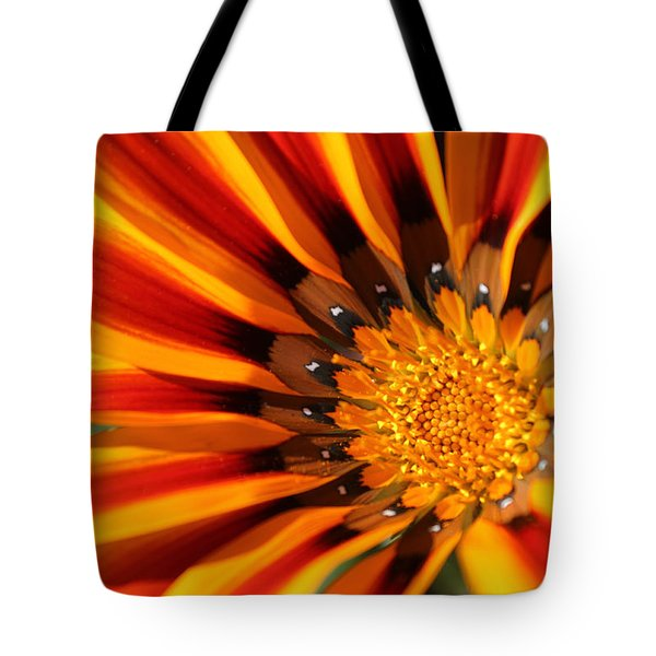Tote Bag featuring the photograph Gazania Glory by Richard Stephen
