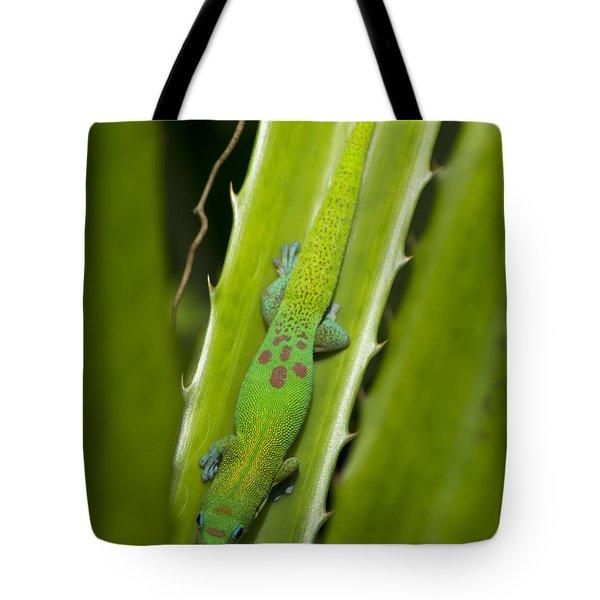 Gecko Tote Bag by Mike Herdering