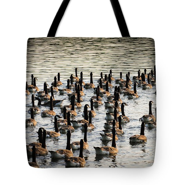 Geese In Sunset Light Tote Bag