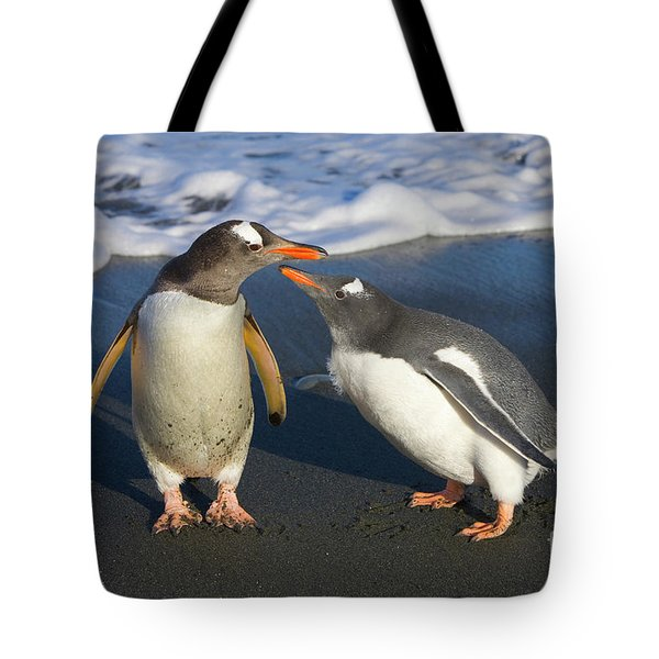 Gentoo Penguin Chick Begging For Food Tote Bag