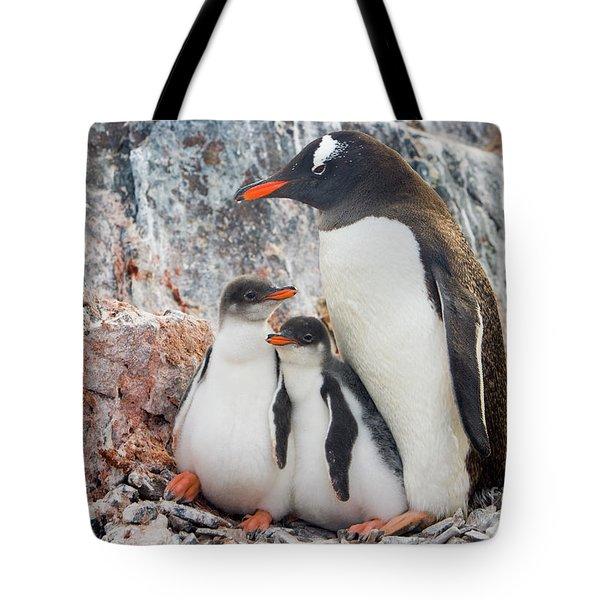 Gentoo Penguin Family Booth Isl Tote Bag by Yva Momatiuk and John Eastcott