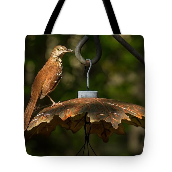 Georgia State Bird - Brown Thrasher Tote Bag