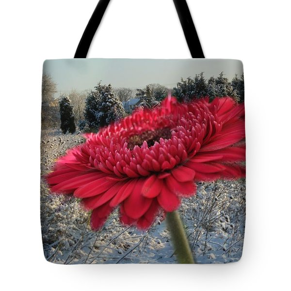 Gerbera Daisy In The Snow Tote Bag
