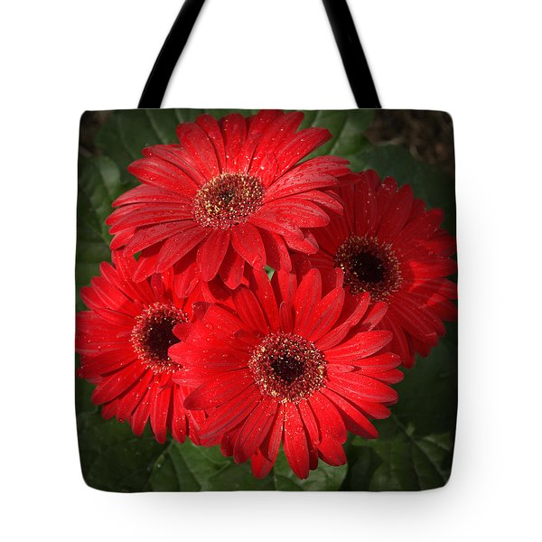 Gerbera  Daisy Tote Bag