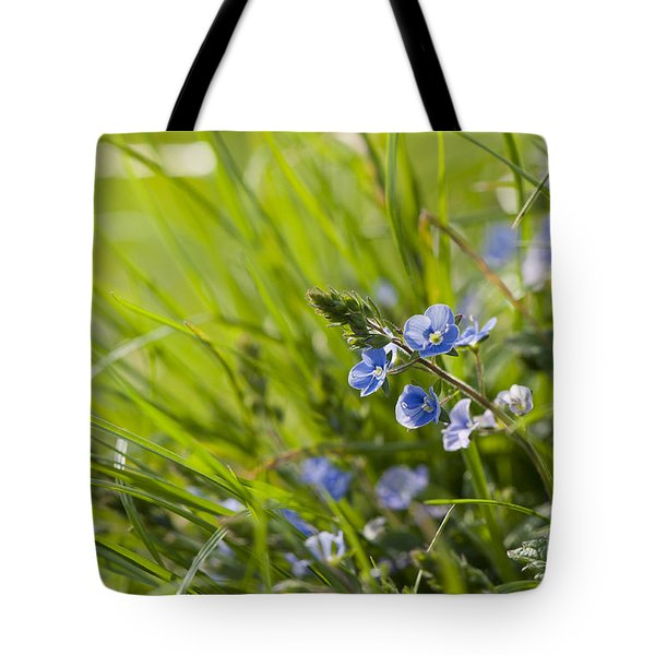 Germander Speedwell Tote Bag by Anne Gilbert