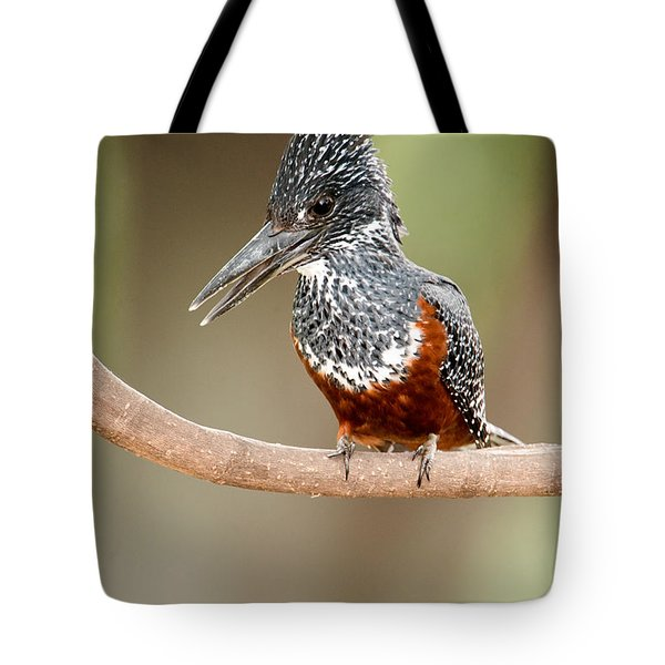 Giant Kingfisher Megaceryle Maxima Tote Bag by Panoramic Images