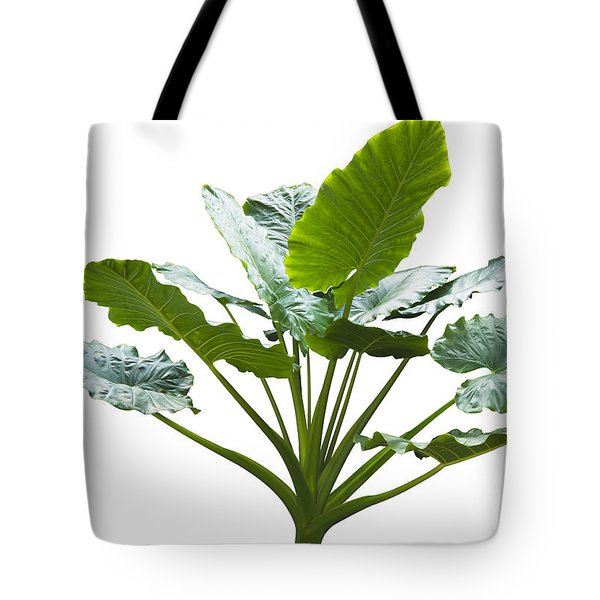 Giant Leaf Tote Bag by Atiketta Sangasaeng