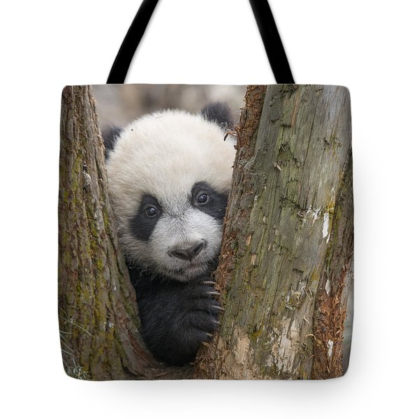 Tote Bag featuring the photograph Giant Panda Cub Bifengxia Panda Base by Katherine Feng