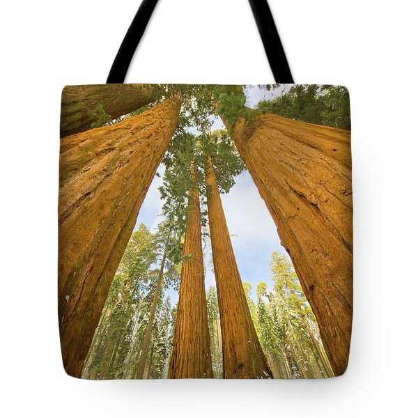 Giant Sequoias And First Snow Tote Bag