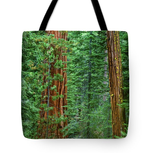 Giant Sequoias Sequoiadendron Gigantium Yosemite Np Ca Tote Bag by Dave Welling
