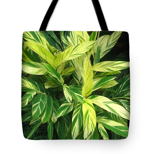 Tote Bag featuring the photograph Ginger Lily. Alpinia Zerumbet by Connie Fox