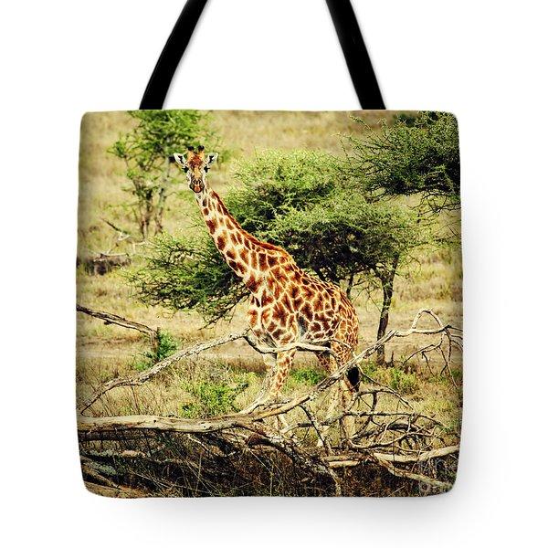Giraffe On African Savanna Tote Bag by Michal Bednarek