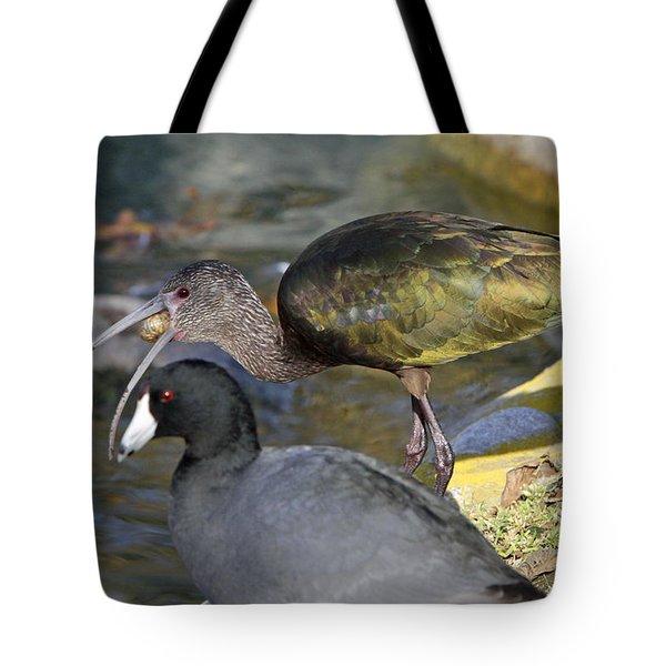 Glossy Ibis Eating Tote Bag by Shoal Hollingsworth