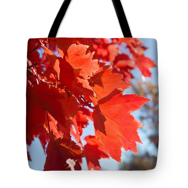 Glowing Fall Maple Colors 4 Tote Bag