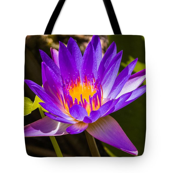 Glowing From Within Tote Bag by Jane Luxton