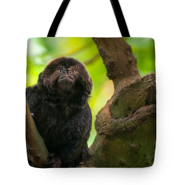 Tote Bag featuring the photograph Goeldi's Callimico by Bianca Nadeau