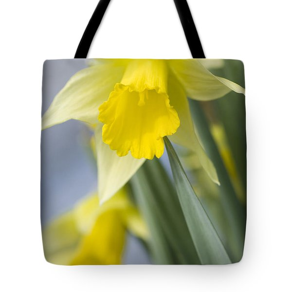 Golden Daffodils Tote Bag by Anne Gilbert