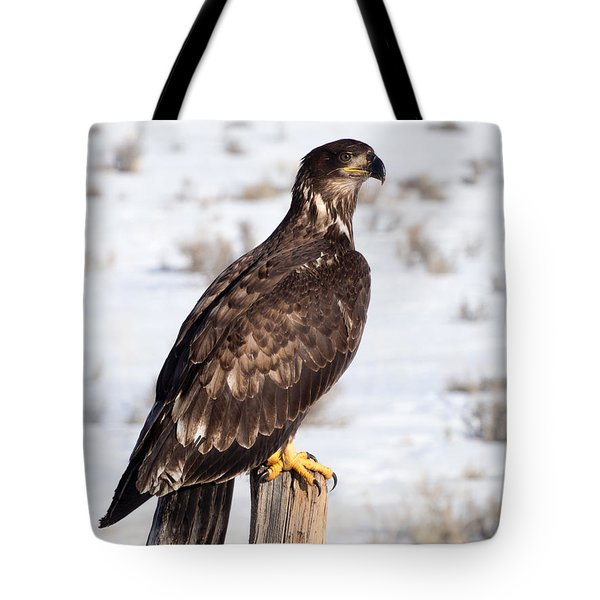 Golden Eagle On Fencepost Tote Bag