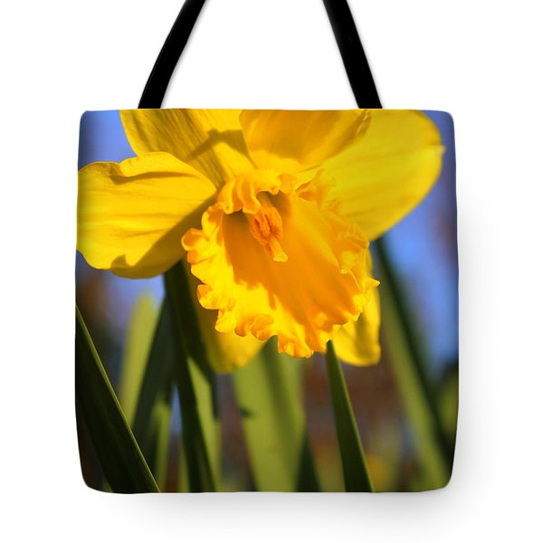 Golden Glory Daffodil Tote Bag by Kathy  White