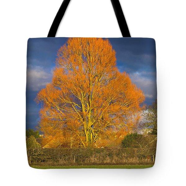 Golden Glow - Sunlit Tree Tote Bag