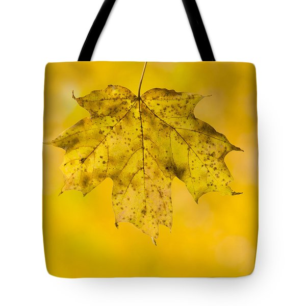 Tote Bag featuring the photograph Golden Maple Leaf by Sebastian Musial
