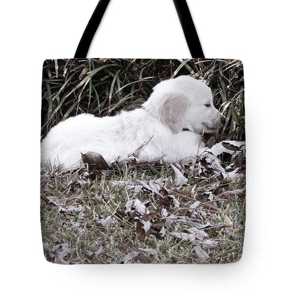 Golden Retriever Puppy 2 Tote Bag by Andrea Anderegg