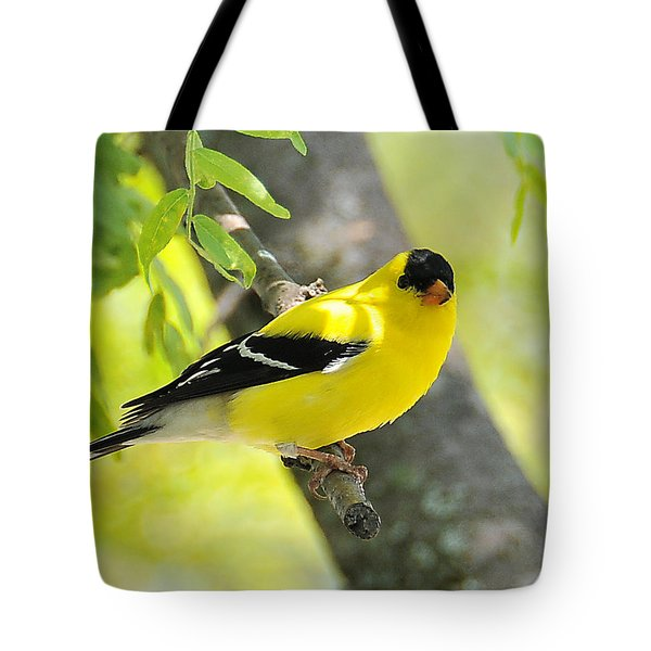 Goldfinch 299 Tote Bag