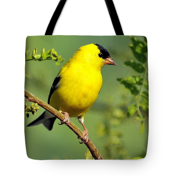 Goldfinch 328 Tote Bag