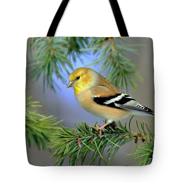 Goldfinch In A Fir Tree Tote Bag